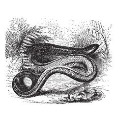 Slow Worm Vintage engraving vector image vector image