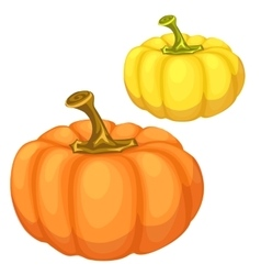 Yellow and orange pumpkin on a white background vector image
