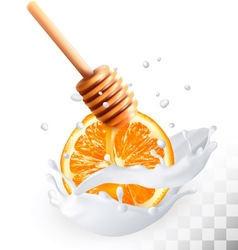 Orange and honey in a milk splash on a transparent vector image