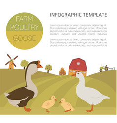 poultry farming goose family isolated on white vector image
