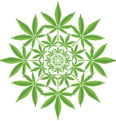 Round pattern from cannabis leaf vector