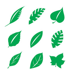 green leaves design element vector image vector image