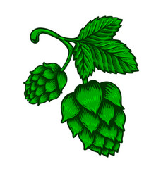branch beer hop in engraving style design vector image