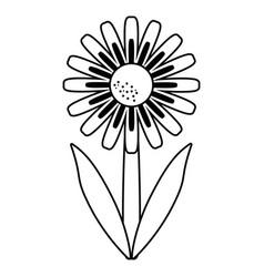 daisy floral garden spring thin line vector image