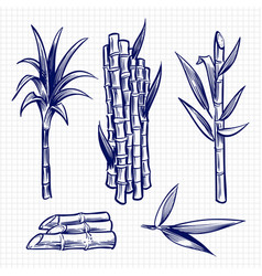 Hand drawn sugar cane set vector