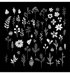 set of white chalk flowers leaves and branches vector image