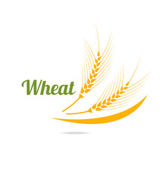 logotype template with wheat vector image