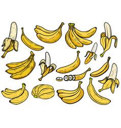 big set banana design element for poster vector image
