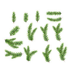 collection set of realistic fir branches for vector image