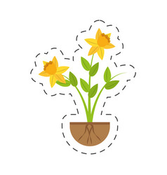 daffodil flower spring floral growing vector image