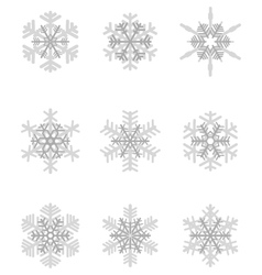 different gray snowflakes vector image