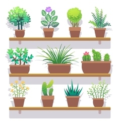 Indoor plants in pots flat icons set vector image