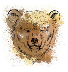 Sketch bear head on the colored background vector