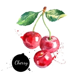 Hand drawn watercolor painting cherry on white vector image