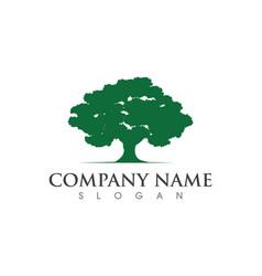 Oak tree leaf logo template vector