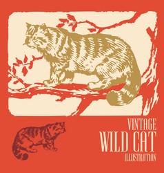 Vintage animal design wild cat vector