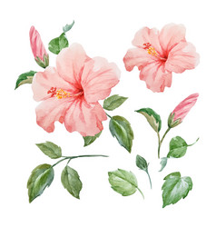 watercolor tropical hibiscus flower vector image