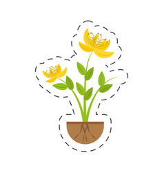 Yellow lily flower natural growing vector