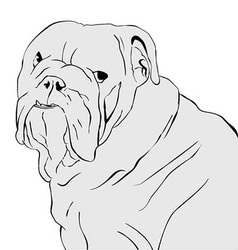 bulldog portrait vector image