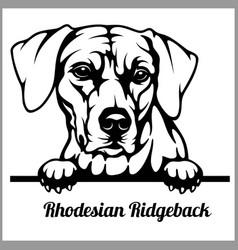 rhodesian ridgeback - peeking dogs - - breed face vector image