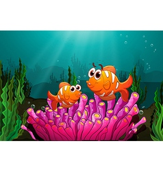 Two fishes above a pink coral vector image