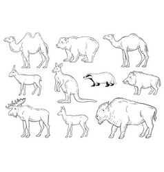 collection of wild animals on white background vector image