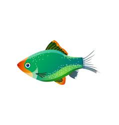 Green tiger barb ocean inhabitant colorful poster vector