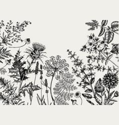 Hand-sketched herbs flowers weeds meadows vector