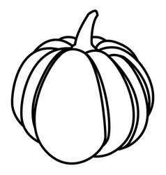pumpkin vegetable design vector image