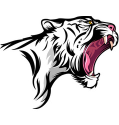 angry white tiger vector image