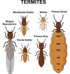 Cartoon type of termites collection set vector