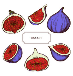 Collection of hand drawn figs highly vector