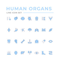 set color line icons human organs vector image