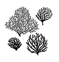 Set of sea reef corals black silhouette isolated vector