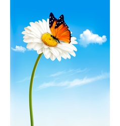 Nature spring daisy flower with butterfly vector image