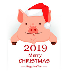 Christmas greeting card cute pig vector