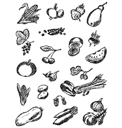 Collection of the drawn vegetables and fruit vector