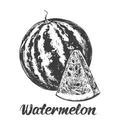 fruit watermelon hand drawn vector image