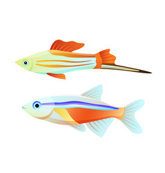 neon tetra and swordtail fish isolated on white vector image