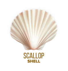 Scallop shell ocean mollusk protection vector