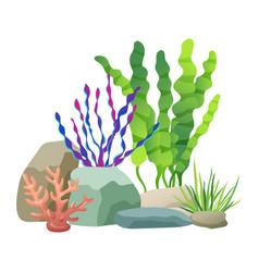 Seaweed rocks and plants set vector
