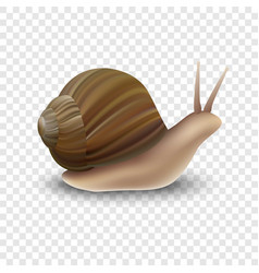 Snail mockup realistic style vector