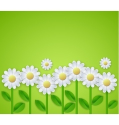Summer floral background with daisy flowers vector image