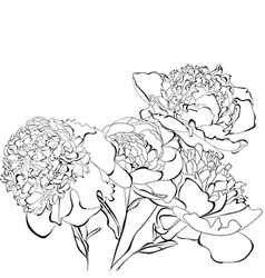 Template for card Peony flowers vector image vector image