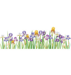 Border with multicolor irises vector
