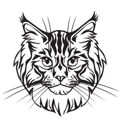 decorative portrait of maine coon cat vector image