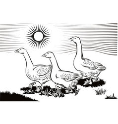 geese in a meadow vector image