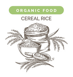 rice harvest sketch vector image