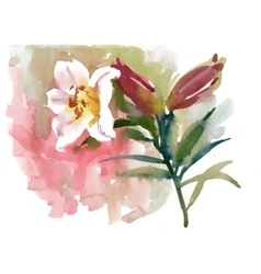 Watercolor beautiful pink lily vector