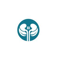 kidney vector image